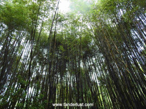 bamboo-grove-retreat-gangtok-sikkim