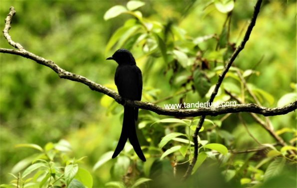 bird-watching-in-sikkim